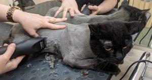 Груминг это подстричь кота